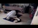 Кошка не дает сделать намаз!!! Очень смешно