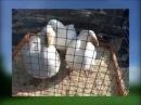 Водоплавающая птица, гуси, утки на выставке в Туле