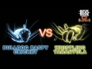 Bulldog Raspy Cricket Vs Whistling Tarantula MONSTER BUG WARS