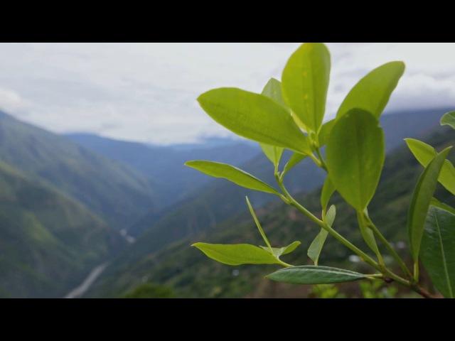 Бесконечные плантации коки. Шашлык из морской свинки. Боливия. Мир Наизнанку - 5 с...