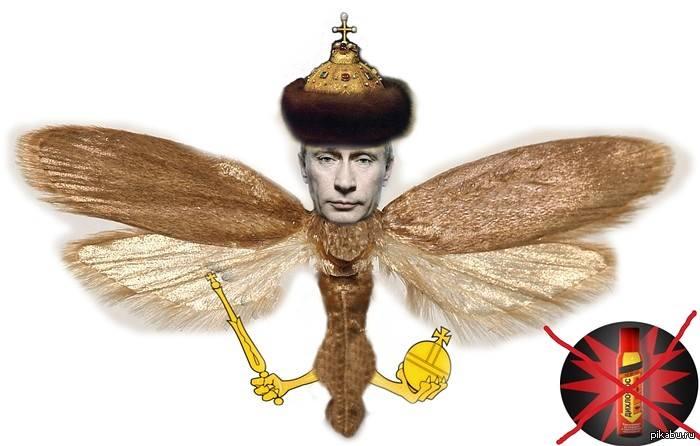 В Красноармейске нашли тайник с оружием и символикой террористов, - МВД - Цензор.НЕТ 6127