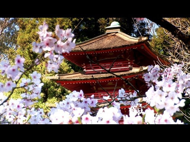 Сад Дзен - релакс музыка Цветение вишни. Zen Garden - Cherry Blossoms, Relaxation Meditation - 50 minutes