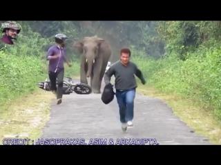 Fil Tarafından Kovalanan Motosikletli