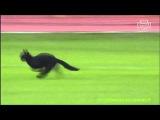 Черный кот перебежал поле игрокам Спартака