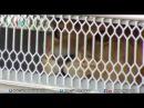 Mexico: Gửi thú từ rạp xiếc sang Mỹ để được nuôi tốt hơn
