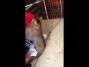 Кисуля турник выход подтягивания кот кошка игра урок гитара brazzers симпсоны гриффины жесть шок видео comedy прикол класс эроти