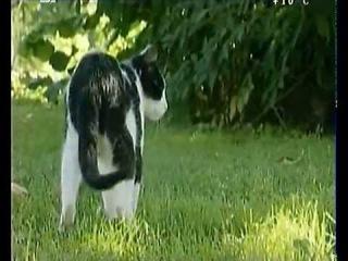 Тайная жизнь Европейских млекопитающих: Европейская дикая кошка
