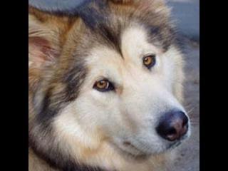 Переводчик с собачьего: «Сомнения в Шедов»