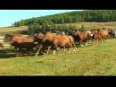 Altai-Kai - Комузым, ойно, ойно (Играй, играй, мои комуз).