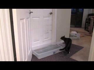 Кот Малдер открывает любую дверь