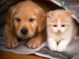 Очень смешное видео (Кто еще не решил кого взять кошку или собаку)