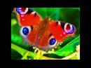 инструменты ХООПОНОПОНО радужная бабочка