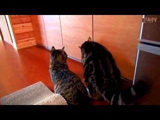 Кошка Позвала на Помощь Кота и Пролетела!