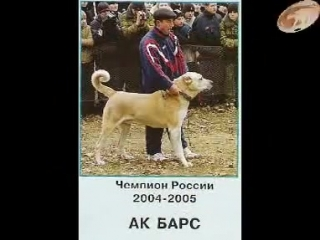 Аланская порода собак.