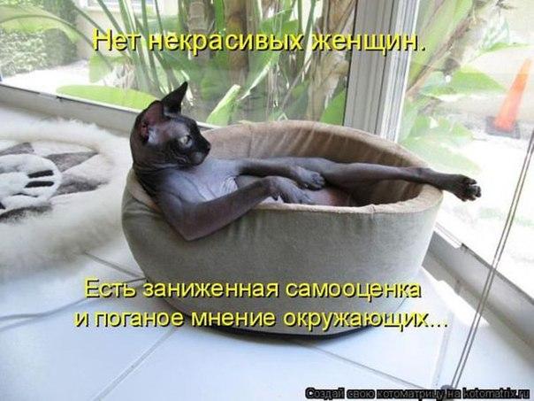 http://cs624726.vk.me/v624726589/1f5fc/fyNO9z27GMo.jpg