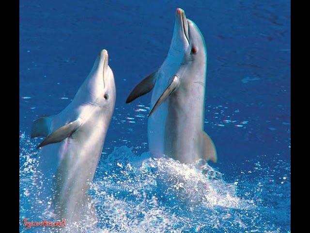 Прикольное видео Дельфины поют и танцуют вальс