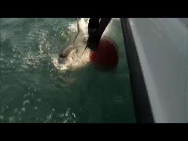 Акульи пастухи 1 сезон 1 серия