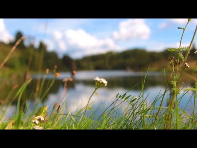 ВЫТЕГОРСКИЙ РАЙОН - презентационное видео