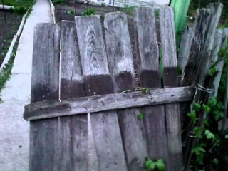 EGOZA-Приключения Даши и Егора Даша ломает забор голыми руками Может сломать тебе нос 28 part