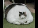 Смешное видео про кошек. Самые веселые моменты в самом смешном видео про кошек.