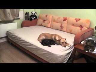 Что Делают Собаки, Пока Ждут Дома Хозяев