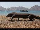 Индонезия. Мандариновые плантации Бали и парк Юрского периода на острове Комодо. 22 серия
