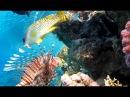 Видео релакс подводный мир Красного моря