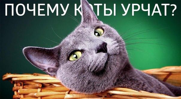 http://cs624728.vk.me/v624728206/5bf6/X9xl7lJG1fk.jpg