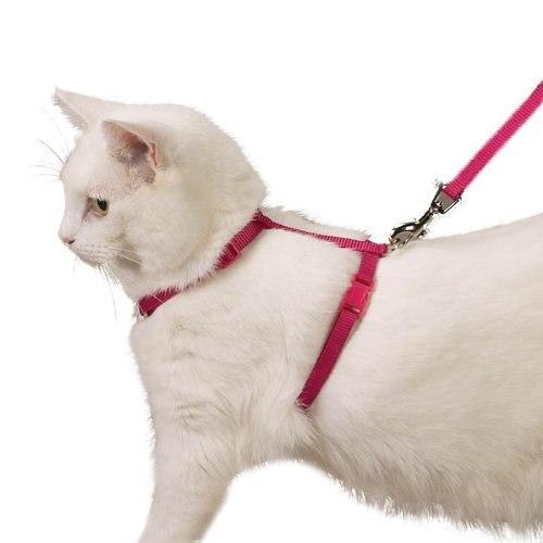 Шлейки для кошки своими руками