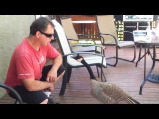 Обычный разговор с гусём