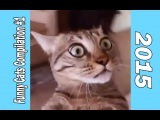Funny Cats Compilation #1 2015 (fail cats, funny cats, vine, coub, amazing, коты, приколы)