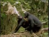 Частная жизнь животных. Самые смешные спаривания. Funny animals