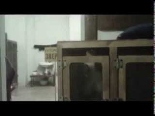 Применения методов жесткой корреции при дрессировке обезьян