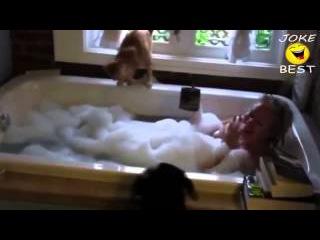 Смешные коты!!! Подборка №33, Funny cats, Прикольные, ржачные,веселые коты,кошки ,котята
