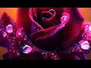 Самые красивые цветы и музыка для моих друзей