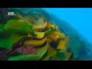 Чудеса голубой планеты [7_7] Антарктика