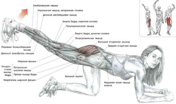 Схемы выполнения упражнений с