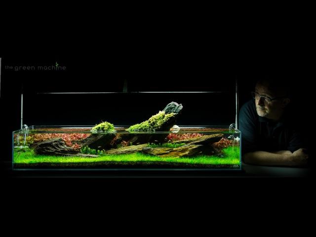 Aquarium Aquascape Tutorial Guide 'Crimson Sky' by James Findley The Green Machine