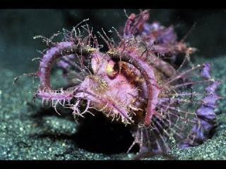 ИНТЕРЕСНОЕ# ТОП-10 самых странных океанских рыб | Интересные факты