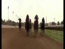 Клип_про_лошадей(кадры_из_фильмов_Шергар