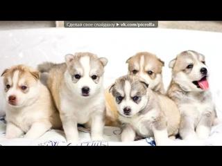 «Со стены Собаки» под музыку Светлана Копылова - Про собаку. Picrolla
