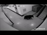Китай. Медведь в школе (12.10.2015 г.)