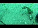 Подводная съемка, Черное море, (Крым)