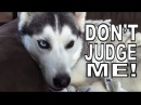 Psychostick - Dogs Like Socks official music video Im a dog and I like socks