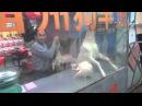 Китайцы едят собак - Жизнь в Китае 30