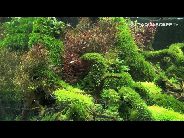 Planted aquariums of Heimtiermesse 2015, Hannover - part 4