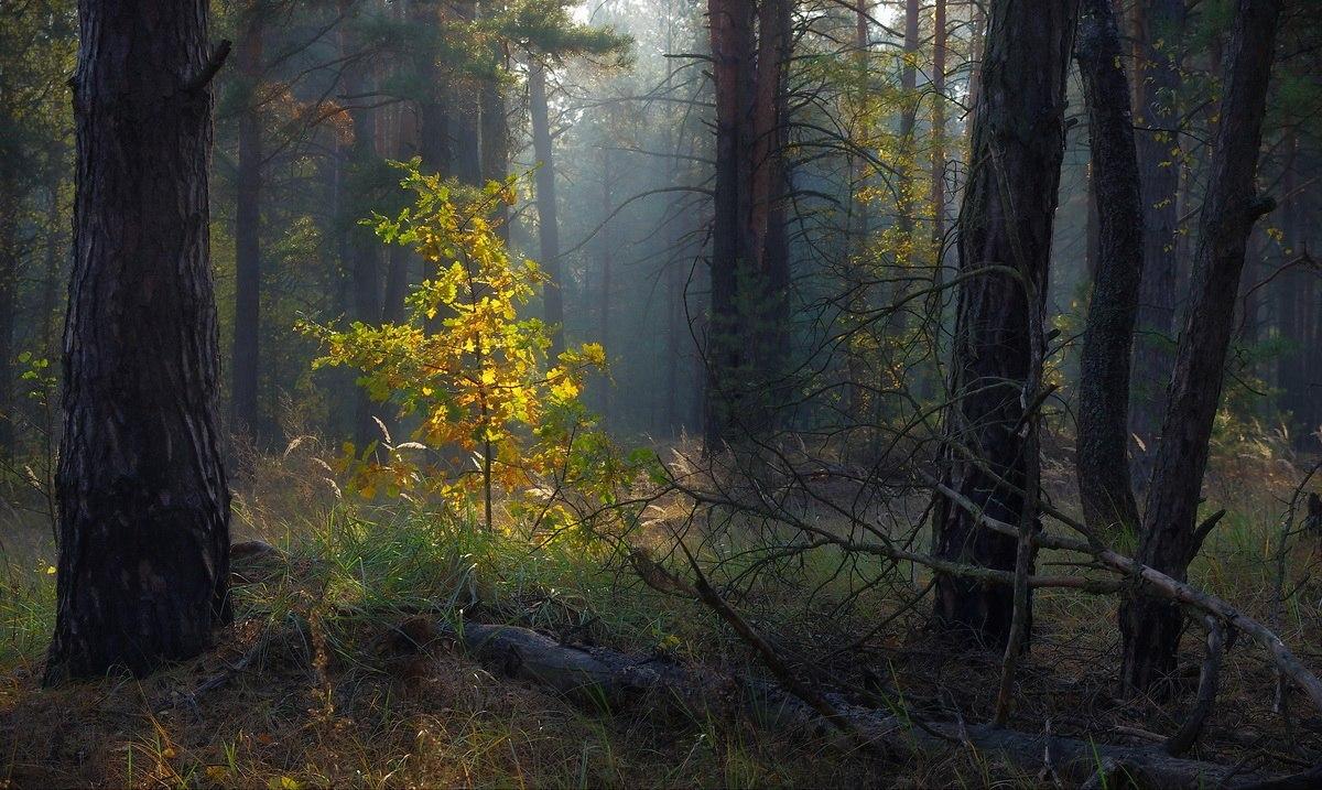 7 вопросов фотографу. Сергей Шляга