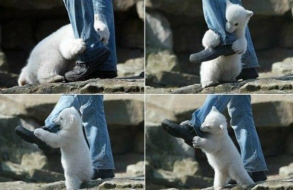 Полярный медведь напал на человека! Слабонервным не смотреть!