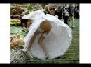 Свадебные приколы Приколы на свадьбе