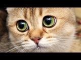 Ржачные няшные котики! Кошачие танцы под музыку 2015! Смешные котята!!!